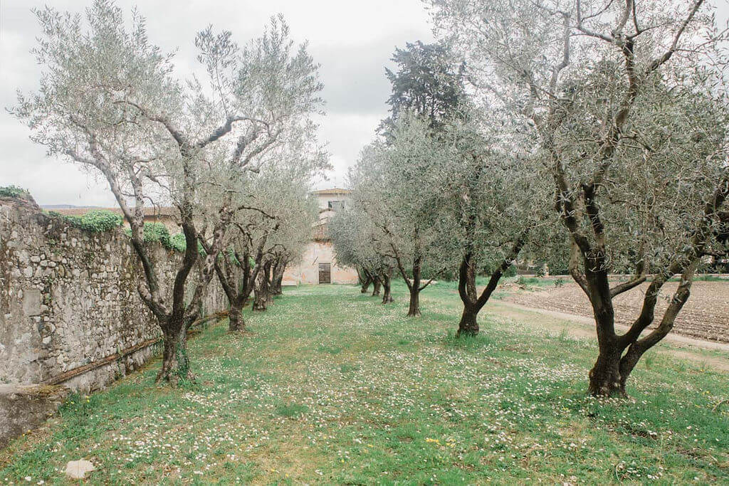 tree lined grove on the grounds of villa pazzi, tuscany wedding venue